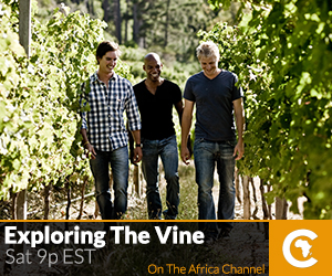 Exploring the Vine